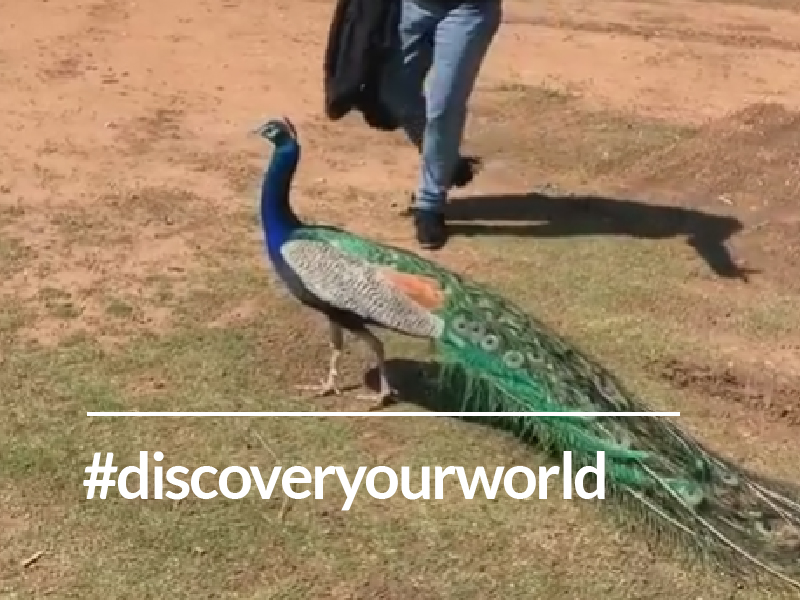 Discovering your personal mission (Dr. Miller and the Peacock)